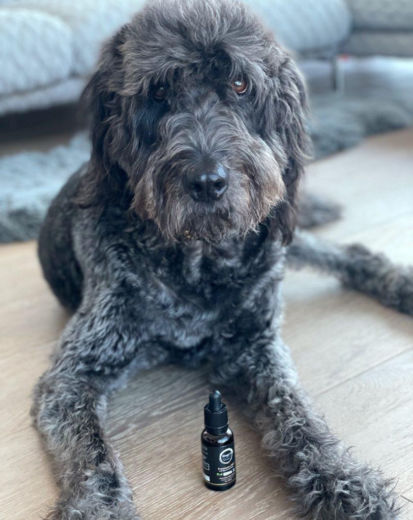Can dogs have cbd | Singys CBD