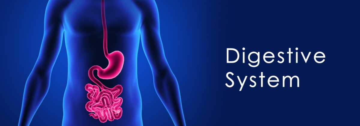 Digestion and GI Health Can Impact Your Entire Well Being - Singy's Premium CBD Oil