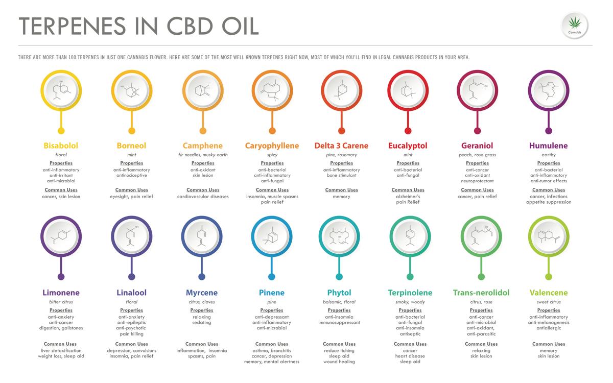 Terpenes in CBD Oil | Singys CBD